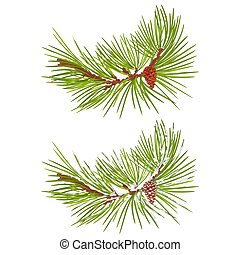 Pine branch with snow and pine cone vector.eps