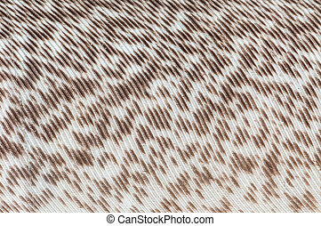 FIbers - A bird feathers with brown and white fiber