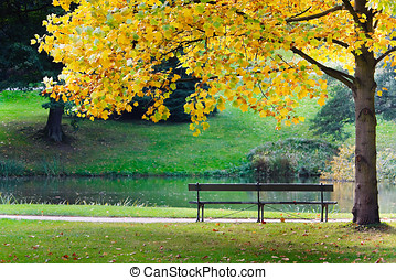 Bench in park - Empty bench in park, under yellow tree, near...