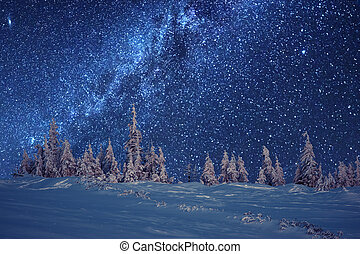forest - winter forest and milky way
