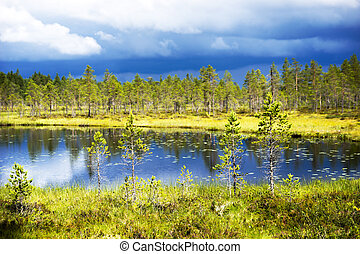 Conifer trees by lake in Scandinavian wetland on sunny day