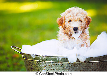 Adorable Cute Young Puppy Outside in the Yard Taking a Bath...