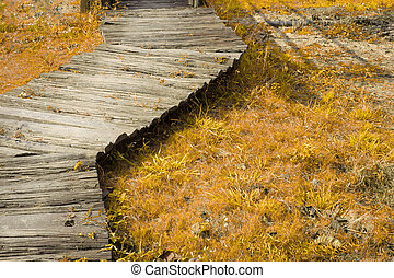wood walkway in autumn, dry plants, edit color