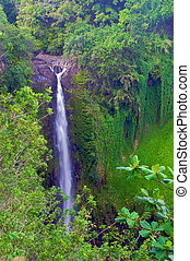 Beautiful Waimoku Falls, Maui - a scenic veiw of Waimoku...