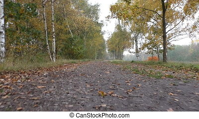 Autumn walk in woods low angle - Low angle POV walk along...