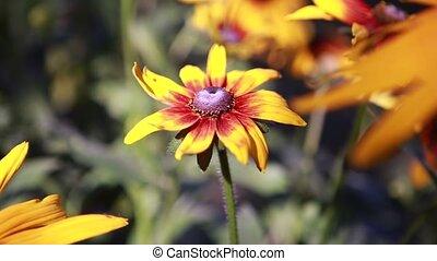 beautiful yellow flower sways in the wind