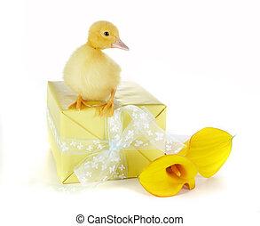 Birthday duck