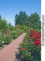 Roses, evergreens and red brick path vertical - Flower beds...