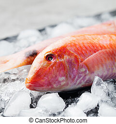 Red mullet fish on ice cubes Black stone board