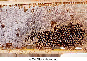 A Frame Of Honey - a hive frame and honeycomb dripping with...