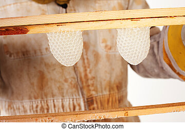 Honeycomb - a beekeeper holding up two fresh honeycomb...