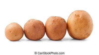 New potato isolated on white