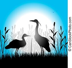 herons - silhouette of herons in the marsh