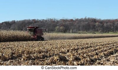 Harvesting a corn field - A farmer harvests his corn field...