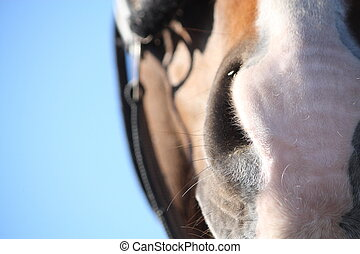 Close up of brown horse head with bridle