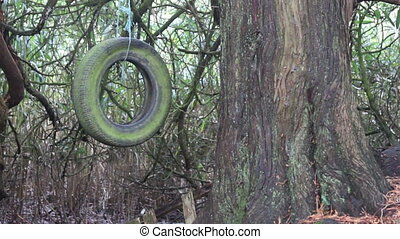 Old Tire Swing - An old decaying moss covered tire swing...