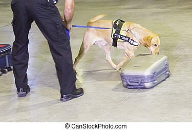 Customs drugs detection dog - Customs officer and his dog...
