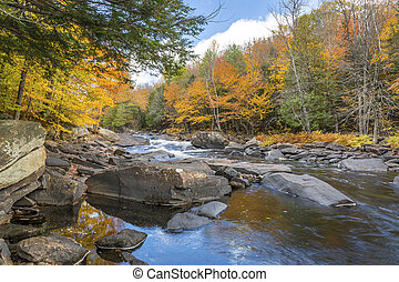 River Flowing Through a Forest in Autumn - Ontario, Canada -...