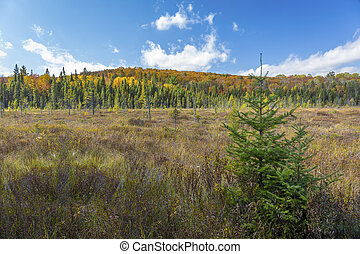 Beaver Meadow in Autumn - Ontario, Canada - Beaver Meadow in...