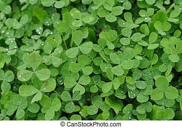 Green Clover Shamrock Background - Verticle Green Clover...
