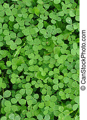 Green Clover Shamrock Background - Vertical Green Clover...