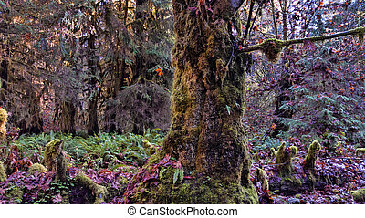 Mossy Forest Tree