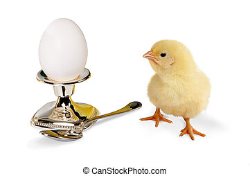 Escape from destiny - 24 hours old easter chick looking at a...
