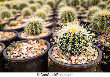 Close up small many cactus in the pots in garden