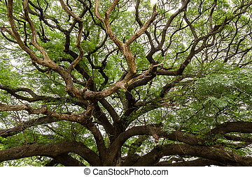branches of a big tree