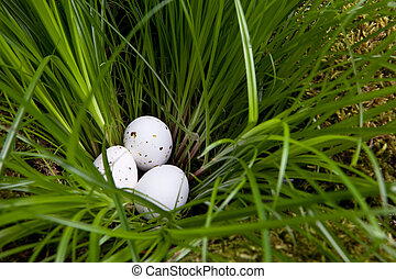 Eggs in high grass