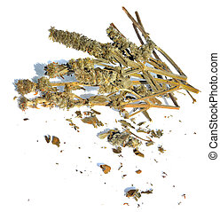 Dried Woundwort - Dried Wood betony on a white background