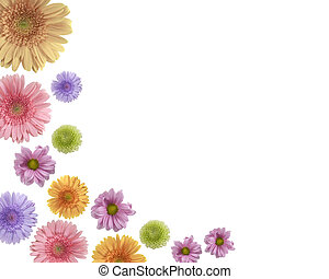 Coloured flowers - Beatiful border ( frame ) from gerberas...