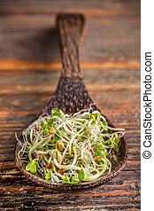 Mix of green young sprouts in wooden spoon