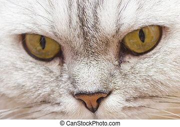 Big gray cat - The big gray cat looks before himself very...