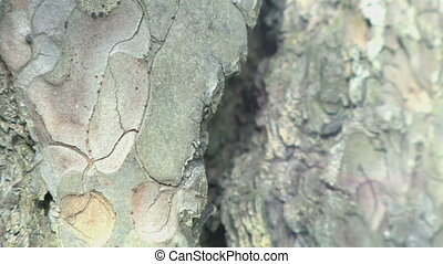 Tree bark close up texture HD stock footage