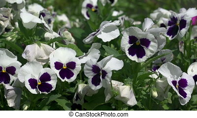 Flowers on a bed of pansies - Waving flowers at the cottage...