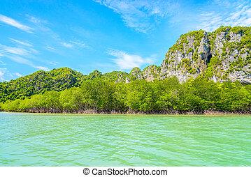 schöne, tropische,  Thailand, wald, Mangrovenbaum