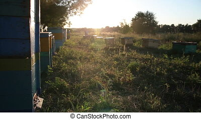 Beehive at sunset. Bees, Hive, Honey, Apiary - Beehive at...