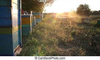 Beehive at sunset. Timelapse - Beehive at sunset. The Bees...