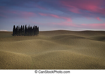 Tuscany landscape with cypress