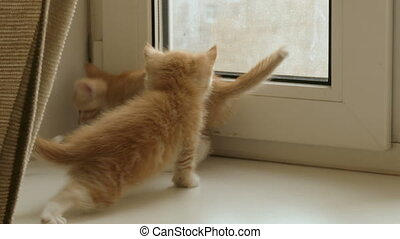 little red kittens are sitting by the window and play