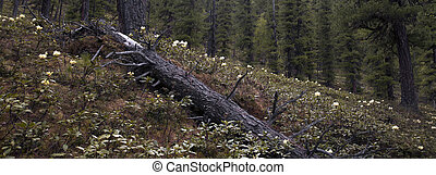 forest1 - dark forest in Siberia in mid-summer