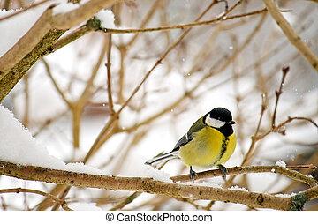 The Great tit bird Parus major perching on a tree branch...