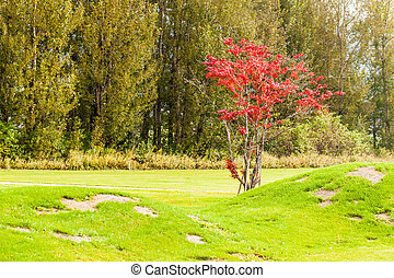 Tranquil scene - a idyllic meadow or golf course in a sunny...