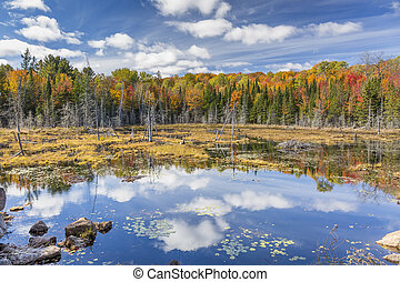 Beaver Pond in Autumn - Ontario, Canada - A beaver pond...