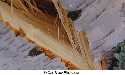 Fault On Birch Truck - Close-up sliding shot of a big breach...