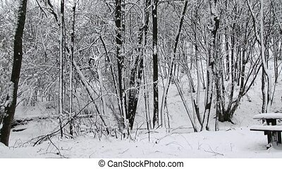 Frosty Winter Landscape In Snowy Forest - This is a video...