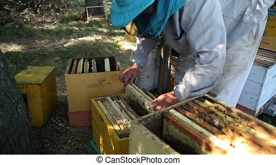 The Employee Selects the Apiary Bee Frames - Workers Collect...