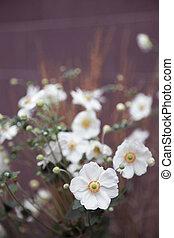 Flores - flores