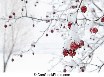 Red Fruit Tree Against White Snowy Background - Red Crab...